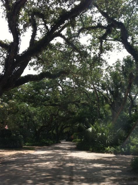 spanish oak 2